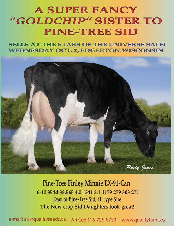 Quality Bolton Fiscon VG-89-2nd calf